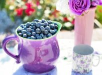 Blueberries Summer Fruit Color Palette