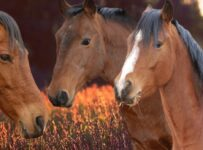 Brown Horses Color Palette