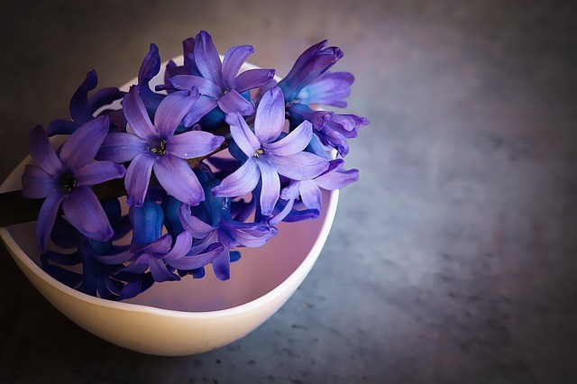 Flower Violet Color Palette