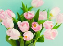 Fresh Cut Pink Bloomed Tulips Color Palette
