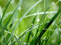 Raindrops On Grass Color Palette
