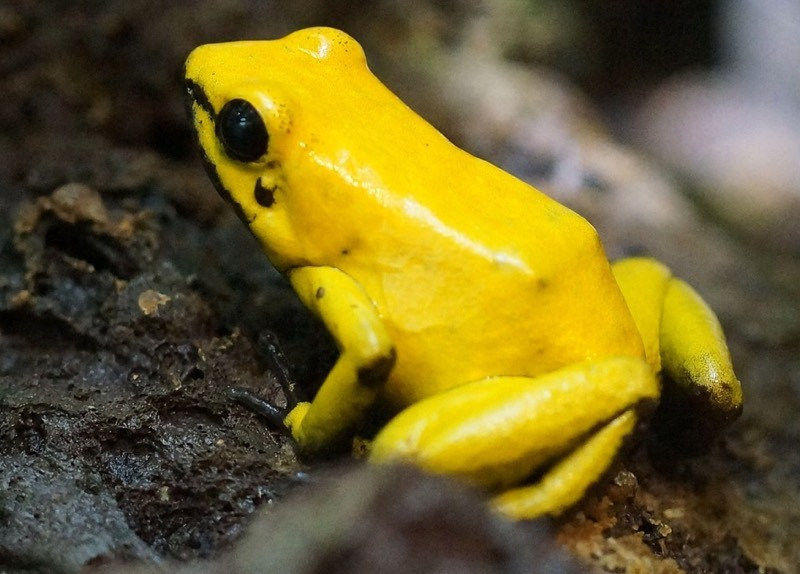 Yellow Frog Color Palette