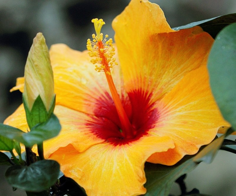 Yellow Hibiscus Color Palette