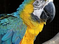 Yellow Macaw Color Palette
